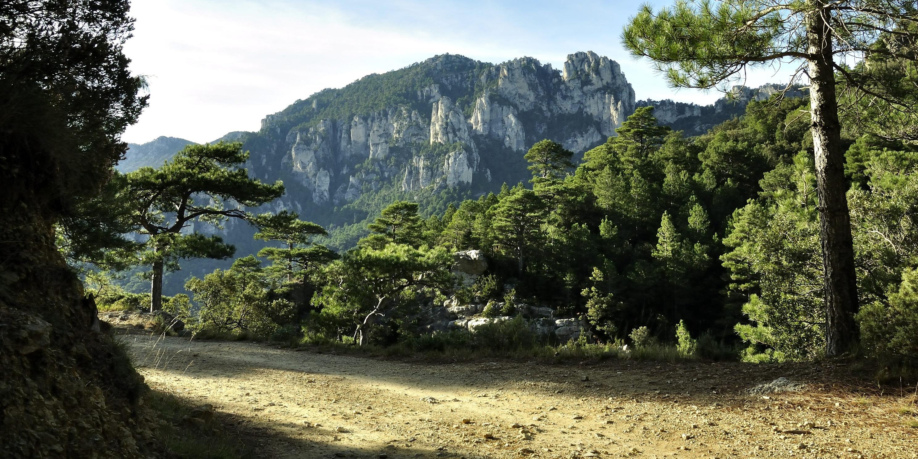 Rutas y actividades gratuitas en los parques naturales de for Cabanas en los arboles comunidad valenciana