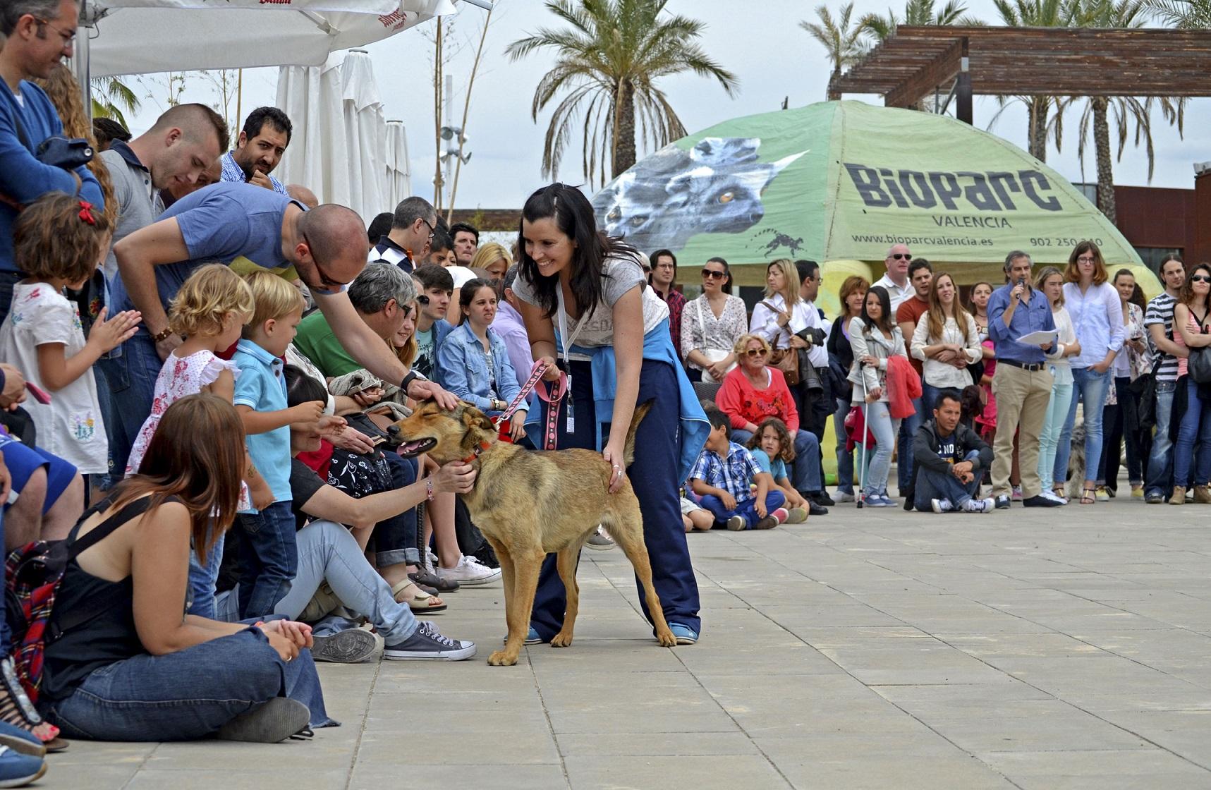 Bioparc-Valencia-4º-desfile-solidario-de-perros-abandonados-18-05-14