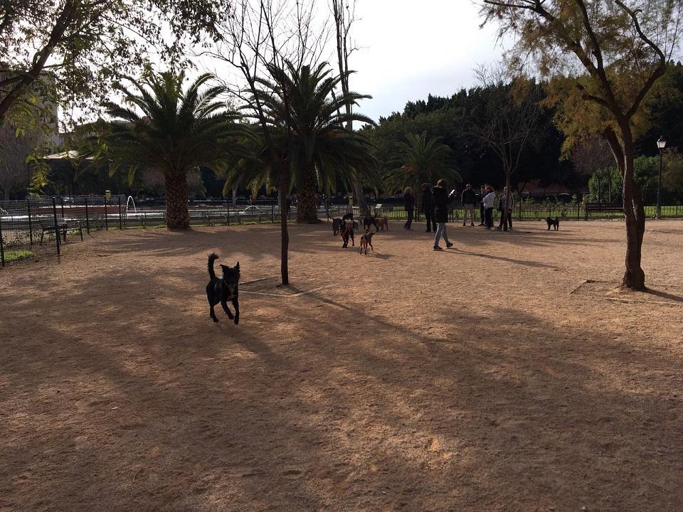 Zona de perros Enric Granados Valencia